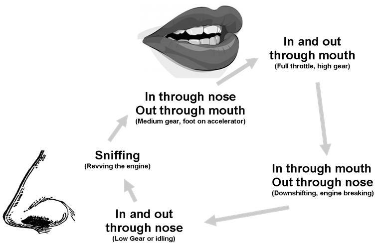 Breathing Stimulation Cycle