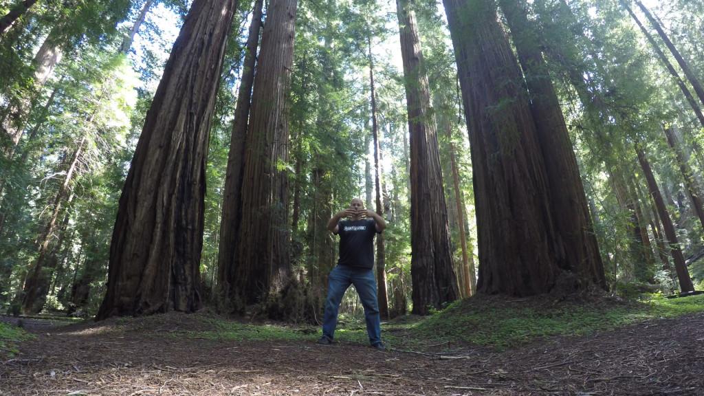 Stand Like a Tree Amongst The Redwoods